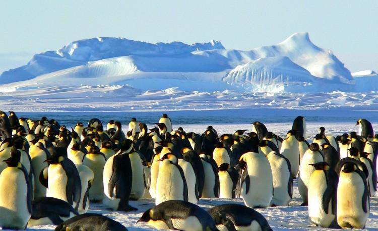 Intel: contare i pinguini dell'Antartide con l'Intelligenza Artificiale