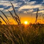 Eni e Coldiretti: accordo per rafforzare il ruolo dell'energia a servizio dell'agricoltura