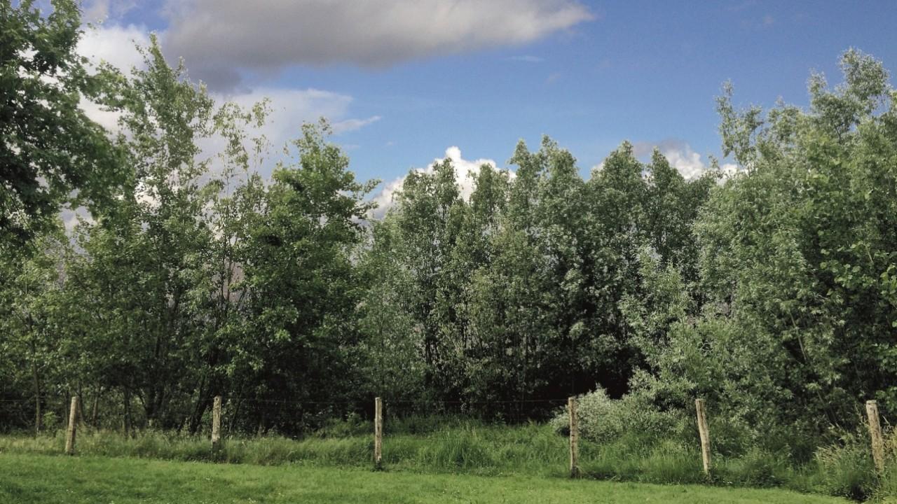 E.ON: oltre 100.000 alberi per il più ampio progetto di forestazione di un'azienda privata in Italia