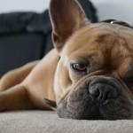 Barkyn: congedo parentale retribuito ai dipendenti che accolgono un animale domestico