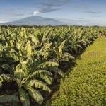 """Chiquita lancia """"30BY30"""", il suo programma di riduzione delle emissioni di CO2"""