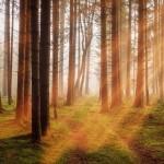 Industrie Chimiche Forestali: presentato il Bilancio di Sostenibilità 2020