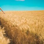 Dl Sostegni, imprese agricole: via libera alla cessione del credito d'imposta