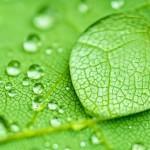 LG: 100% energie rinnovabili entro il 2050