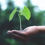 Sostenibilità: un premio per i comuni più virtuosi