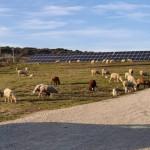 BNZ: un nuovo operatore indipendente entra nel mercato del fotovoltaico