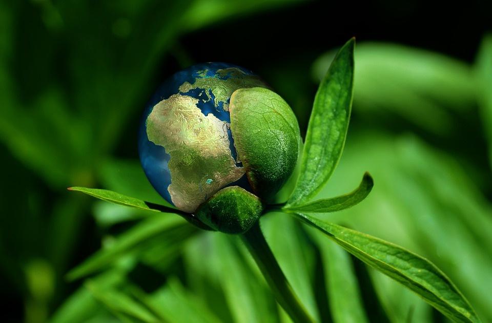 Sofidel: accordo con Meva Energy per nuovo impianto di generazione di bio-syngas