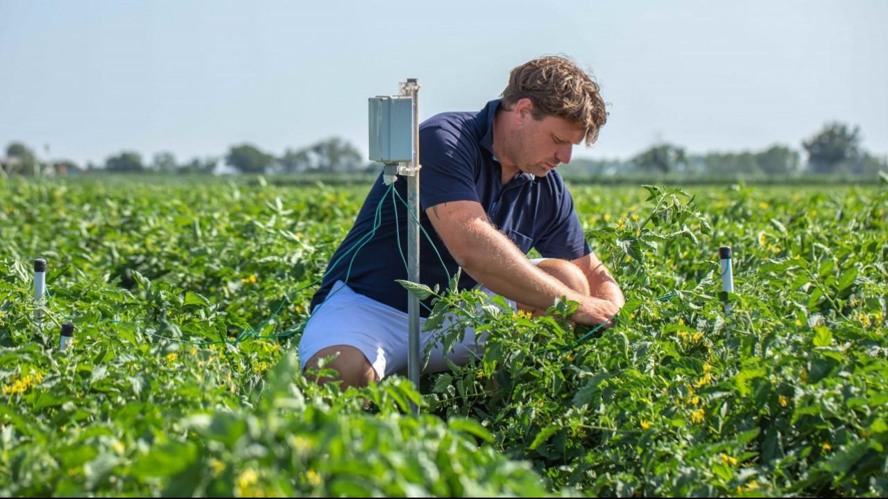 """Nestlé Italia: meno 40% di acqua nei campi di pomodoro grazie a sonde """"intelligenti"""""""