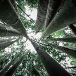 Forever Bambù e Mixcycling puntano alla produzione di una nuova bioplastica derivata dal bambù