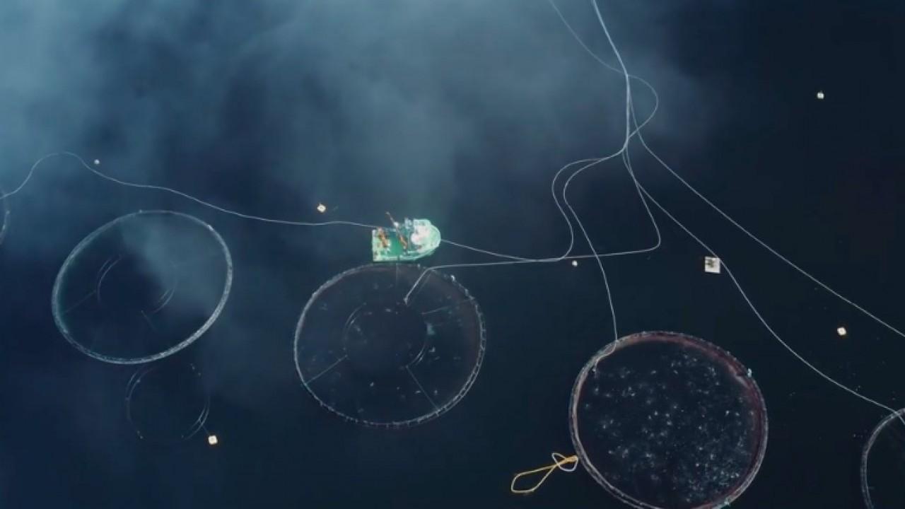 Progetto IBM nelle isole Kvarøy per un'industria ittica più sostenibile